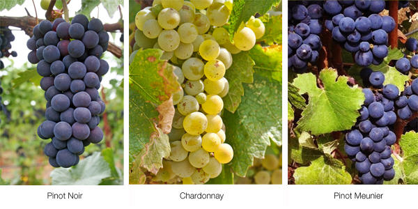 Not just these 3 grape varieties exist in Champagne | Picture courtesy: Dracaenawines